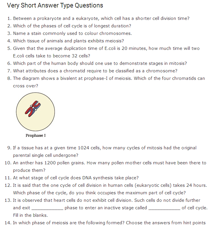 Important questions for class 11 biology chapter 10 cell cycle and important questions for class 11 biology chapter 10 cell cycle and cell division malvernweather Choice Image