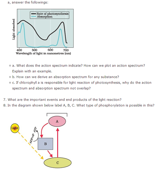 Important Questions Class 11 Biology Chapter 13 Photosynthesis Higher Plants Part 6