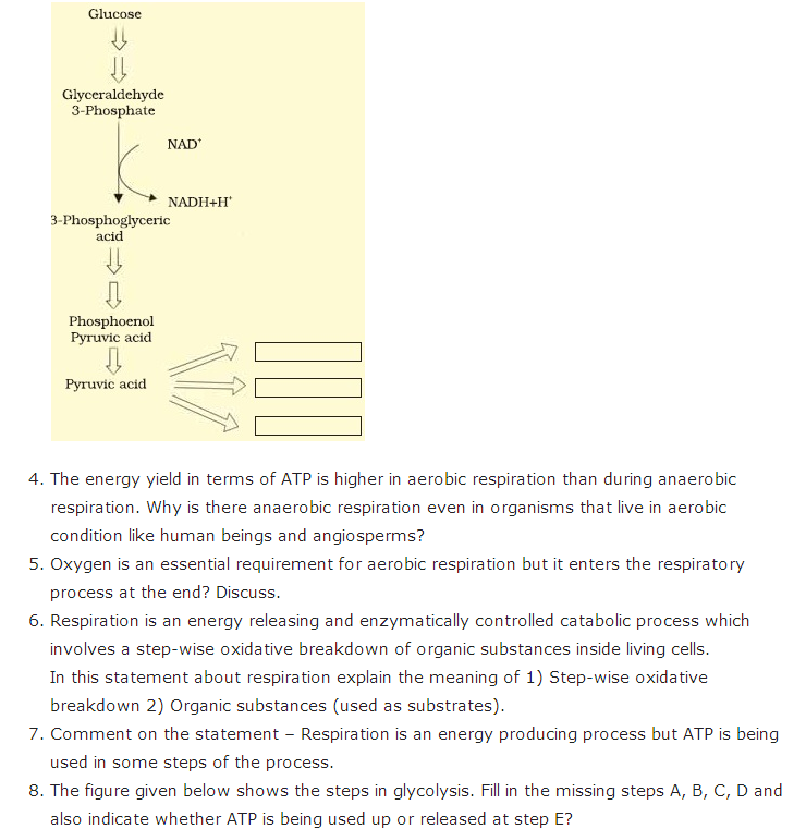 Important Questions Class 11 Biology Chapter 14 Respiration Plants Part 2