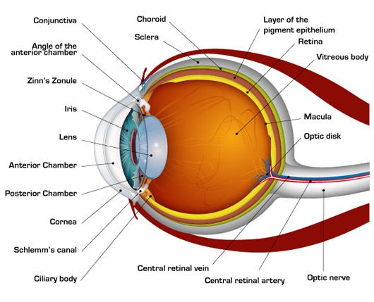 Eye diseases list of eye diseases eye problems glaucoma like several parts of the body the eye is also susceptible to infections or diseases these ones could often be serious and must be dealt with care ccuart Images