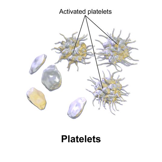 Blood Platelets
