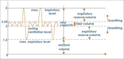 Lung volumes and lung capacity tv irv erv rv ic ec frc lung volumes and capacities graph ccuart Choice Image