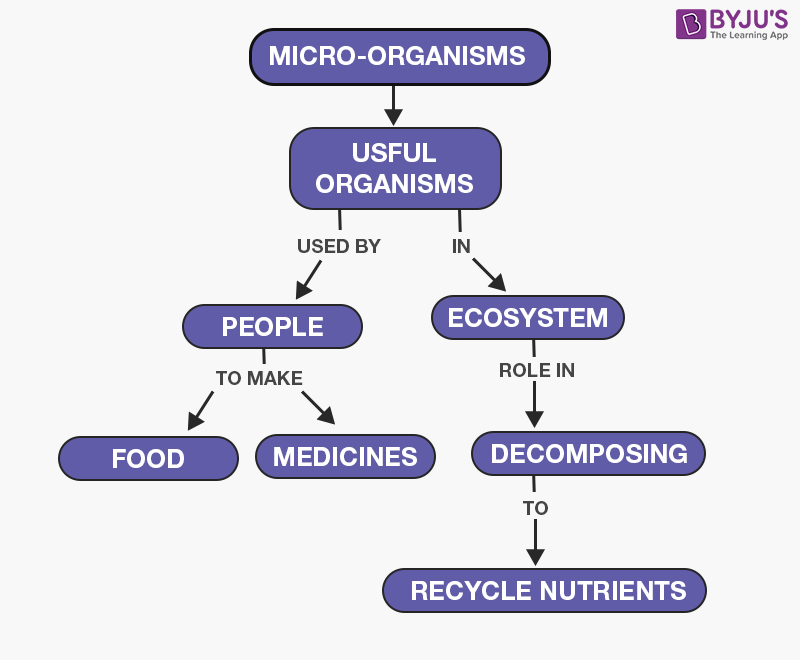 Useful Microorganisms
