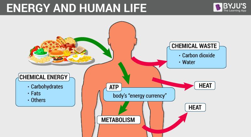 sistem metabolisme di dalam tubuh
