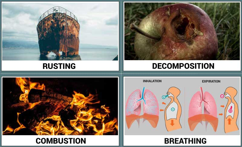 Uses of Oxygen - Breathing,Decomposition, Combustion, Rusting