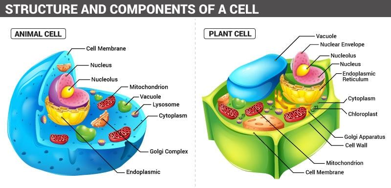 Structure and Components of a Cell