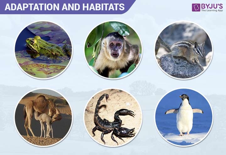 Adaptation and Habitats