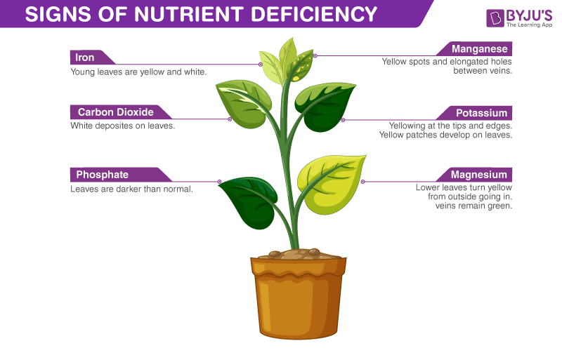 Micronutrients Are Nutrients That Are Vital For Growth And Development