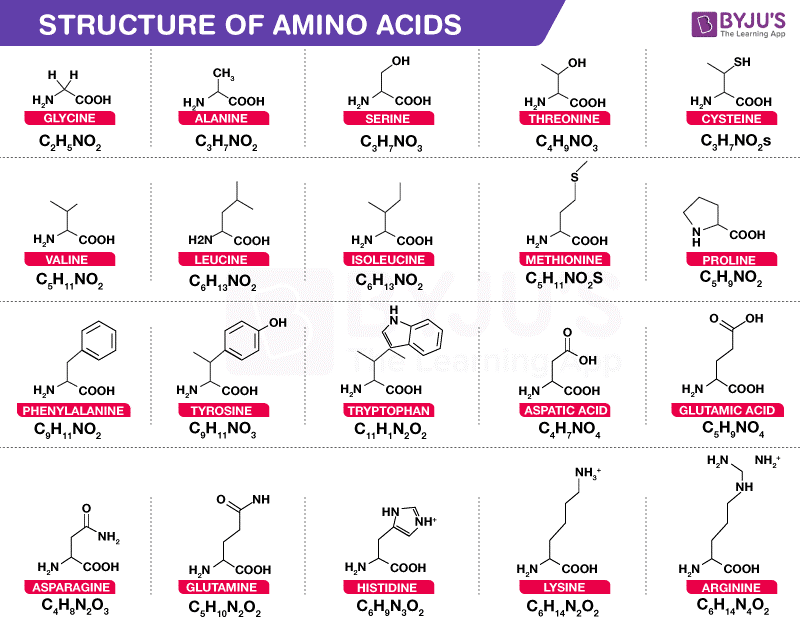 Amino Acids- Properties, Functions, Sources and its ...