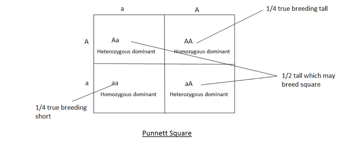 3-9 Heredity and Evolution: Hybridization