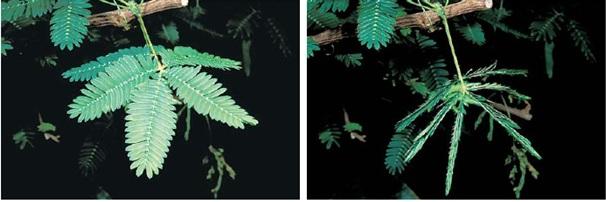 coordination-in-plants-1 Coordination in plants