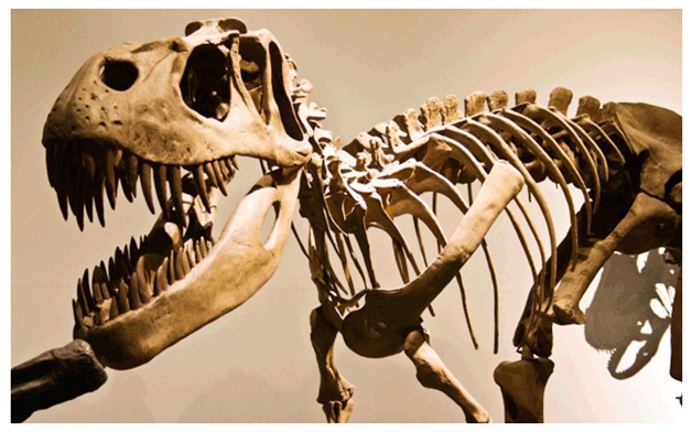 carbon dating fossils evolution The flood: carbon dating, fossils carbon dating and fossils if evolution is true, life is an accident.
