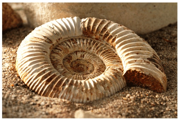 fossils-2 Fossils