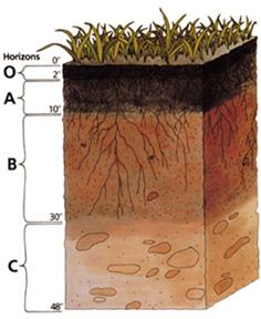 Soil_profile Process of Soil Formation