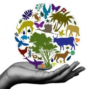 Biodiversity-293x300 The Ecosystem