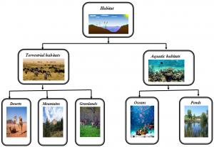 habitat-1-1-300x207 Habitat: The living organism and their surroundings