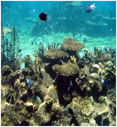 aquatic-habitat Habitat: The living organism and their surroundings