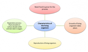 characteristics-of-living-organism-300x177 Habitat: The living organism and their surroundings