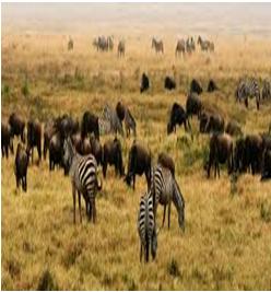 terrestrial-habitat Habitat: The living organism and their surroundings
