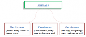 Classification-of-Animals-300x131 Food: Variety and Sources