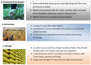 Steps-for-production-of-crops-300x214 Crop production and management