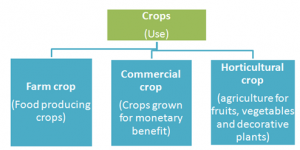 Uses-Crops-300x150 Crop production and management