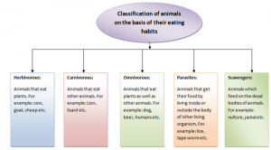Classification-of-animals-300x166 Nutrition in animals | Human digestive system