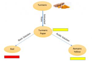 turmeric-indicator-300x198 Acid, Bases and Salts | Indicator | CBSE