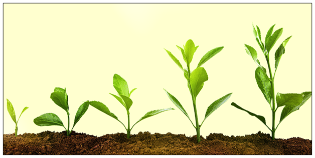 Plant-Growth-Regulators Plant Growth Regulators - Science Project