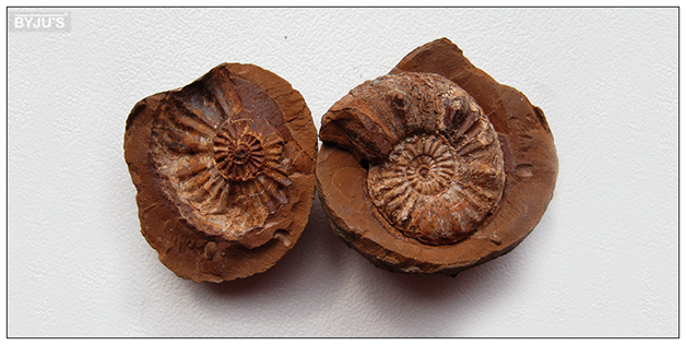 Fossil-Casting Fossil Casting