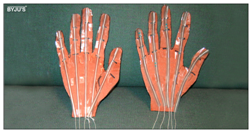 Model-Hand2 Science Projects for Class 6