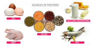 SOURCES-OF-PROTEINS-1-300x150 Balanced Diet-Nutrients and Deficiency Diseases