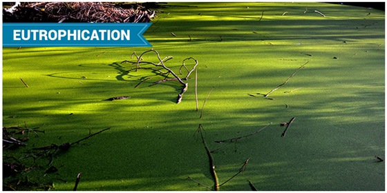 Eutrophication Definition Causes Amp Effects Chemistry