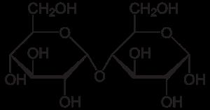 Disaccharides - Maltose