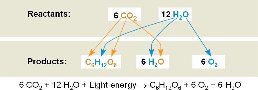 Redox Reactions in the Real Life Uses