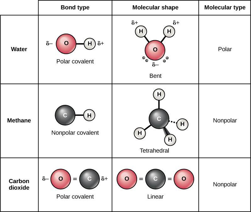 Polar bond