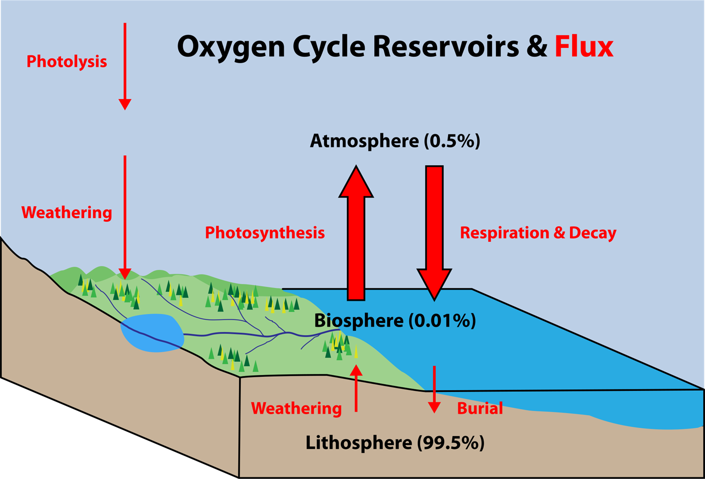 Oxygen cycle meaning steps diagram chemistry byjus oxygen cycle ccuart Image collections