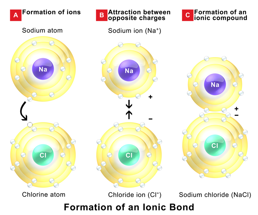 Sodium chloride preparation properties structure uses byjus ionic bond in sodium chloride pooptronica