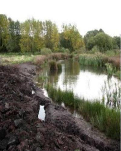 marshy n peat