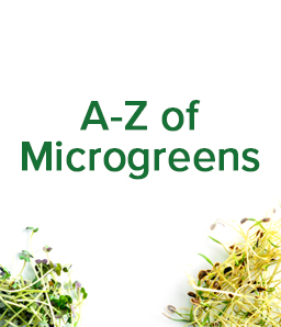 Grow your own Microgreens at home ☘️