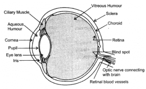 Ncert solutions for class 10 science chapter 11 human eye and 4 ccuart Images