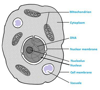 NCERT Solutions For Class 8 Science Chapter 8 Cell ...