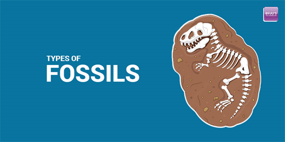 Types-of-fossils