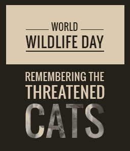 World Wildlife Day – Remembering the Threatened Cats