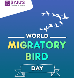 World Migratory Bird Day – 13th May