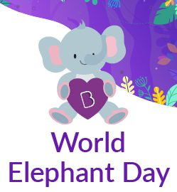 """Meet the """"Real King Of The Jungle"""" – Celebrating World Elephant Day"""