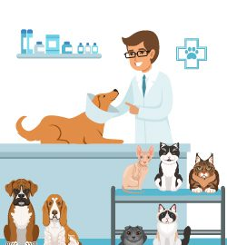 The perfect job for animal lovers: Become a Veterinarian
