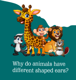 Know the science behind animal ears