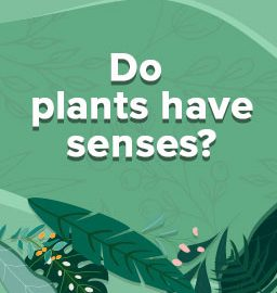 Plants Are Smarter Than You Think!