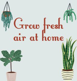 Grow these 3 indoor plants for fresh air!